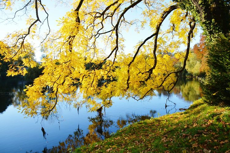 Besançon Tree Yellow Nature Tranquility Outdoors Sky No People Branch Beauty In Nature Scenics Water Day Franchecomte Doubs Besancon France