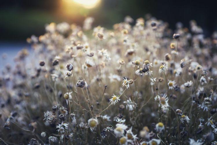 Flower Flower Head Rural Scene Closing Summer Uncultivated Springtime Close-up Plant Sky
