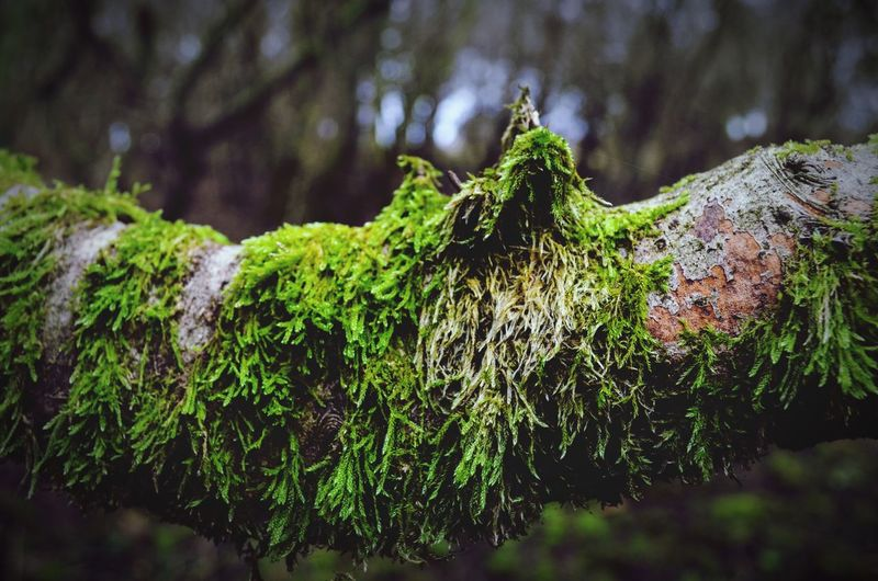 Close-Up Of Ivy Growing On Tree In Forest