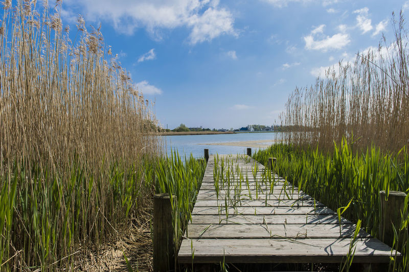 Beach Beauty In Nature Catwalk Clouds Day Horizontal Living Organism Nature No People Outdoors Reed Sky Tranquility Water Wetland Wheelchair Access