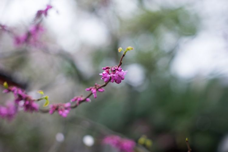Close-Up Of Purple Flower Buds Growing Outdoors