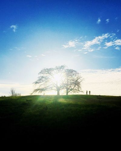 Sunlight Tree Nature Grass Tranquility Sky Field Landscape Tranquil Scene Beauty In Nature Sunlight Growth Outdoors Day Blue No People Scenics