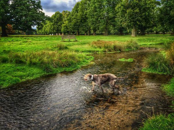 I Love My Dog ❤ LEO... The One Eyed Lurcher... Lurcher Animal Photography Animal Portrait I Love My Dog Sighthound Hanging Out Enjoying Life Summer Dogs