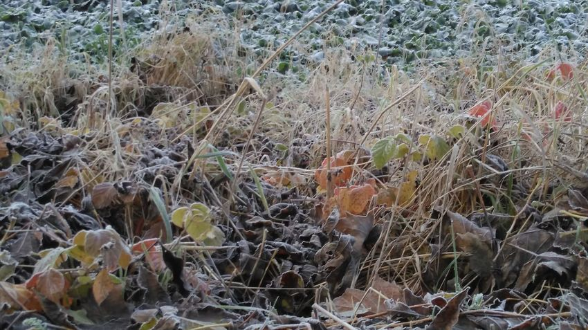 Frost Frosty Frosty Morning Nature Nature Photography Nature_collection Field Growth Outdoors