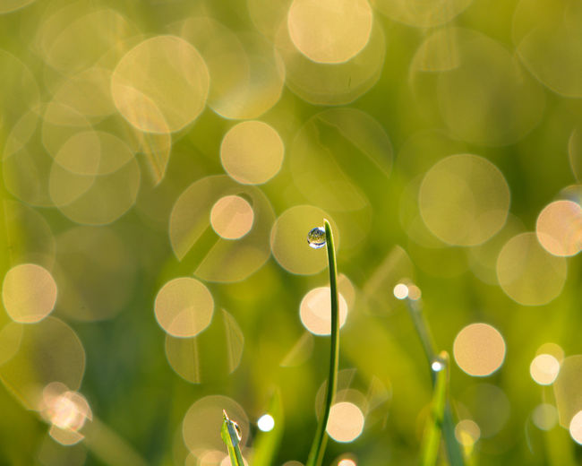 Morning Dew Dewdrops_Beauty Morning Light Beauty In Nature Bokeh Bokeh Photography Close-up Conch Day Defocused Dew Drops Dewdrop Dewdrops Dewdrops On Grass Fragility Green Color Insect Morning Dew Nature No People Outdoors Selective Focus