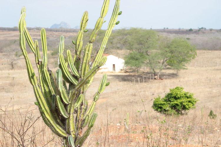 Brazil Brazilian Cacti Cactus Cactus Collection Cactus Garden Cactus Paradise Cactusflower Cactuslover Cactusplants Cactusporn Ceará Day Growth Landscape Nature No People Plant Hidden Gems