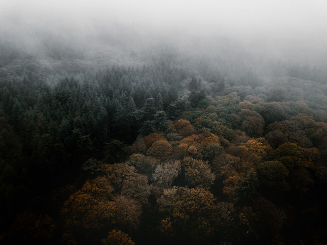 Autumn Forest drone view Tree Plant Fog Beauty In Nature Forest Tranquility Tranquil Scene Scenics - Nature No People Land Nature Environment Growth Day High Angle View Non-urban Scene WoodLand Outdoors Landscape Coniferous Tree Pine Woodland Rainforest