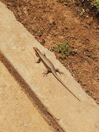 Made a little friend. Hope he shows up more so I can get some better photos of him Animals In The Wild Animal Themes One Animal Day Sunlight Animal Wildlife Outdoors High Angle View Reptile Nature No People Shadow