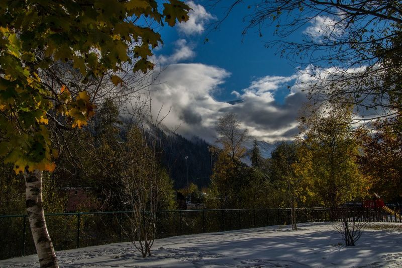 argentiere,chamonix,haute savoie,france Tree Plant Sky Cloud - Sky Beauty In Nature Nature No People Scenics - Nature Tranquility Tranquil Scene Day Growth Outdoors Non-urban Scene Winter Land Sunlight Cold Temperature Snow