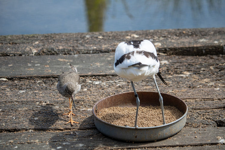Animal Animal Themes Animal Wildlife Animals In The Wild Bird Day Focus On Foreground Food Group Of Animals Lake Nature No People Outdoors Perching Seagull Sunlight Two Animals Vertebrate Water Wood - Material