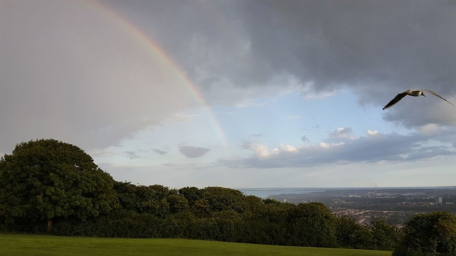 Bird Spectrum Flying Rainbow Double Rainbow Sky