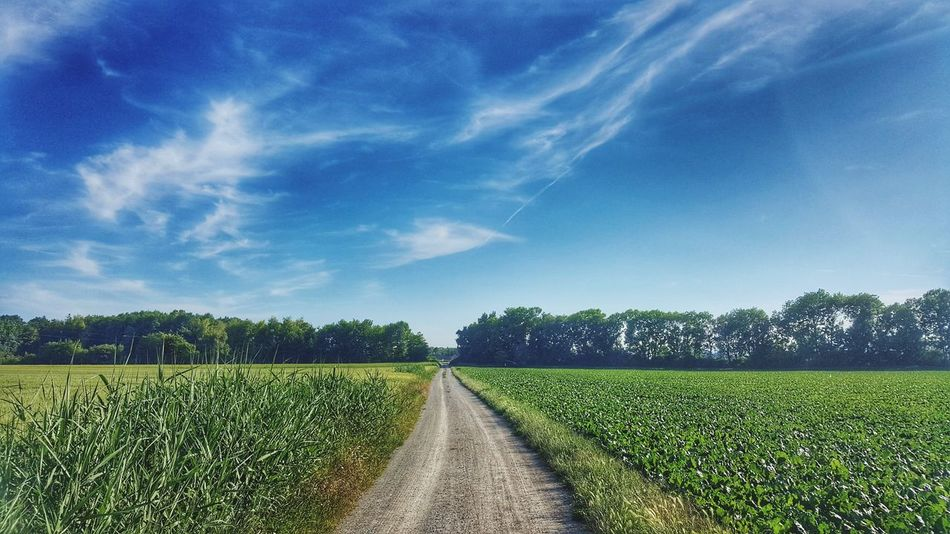 Agriculture Rural Scene Field Sky Scenics Landscape Freshness Tranquility Tree