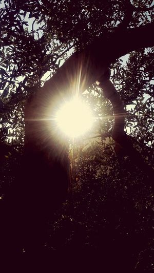 Sun Sun Rays Beautiful Nature Photography Nature Nature Collection Beautiful Nature ☉☉☉ Beautiful Sun ☉🌞🌞☉ ❤❤ ☉ ☉☉