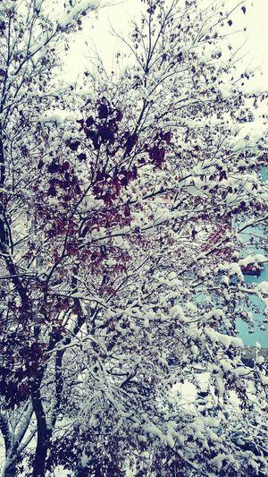 Snow:D First Eyeem Photo