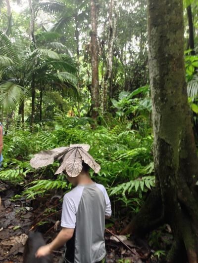 Exploring the rain forest - in the rain St. Kitts Childhood Day Forest Growth Lifestyles Natural Rainhat Nature One Person Outdoors People Rainforest Real People Rear View Tree Tree Trunk