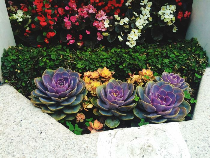 High Angle View Of Fresh Flowers With Succulent Plants In Garden