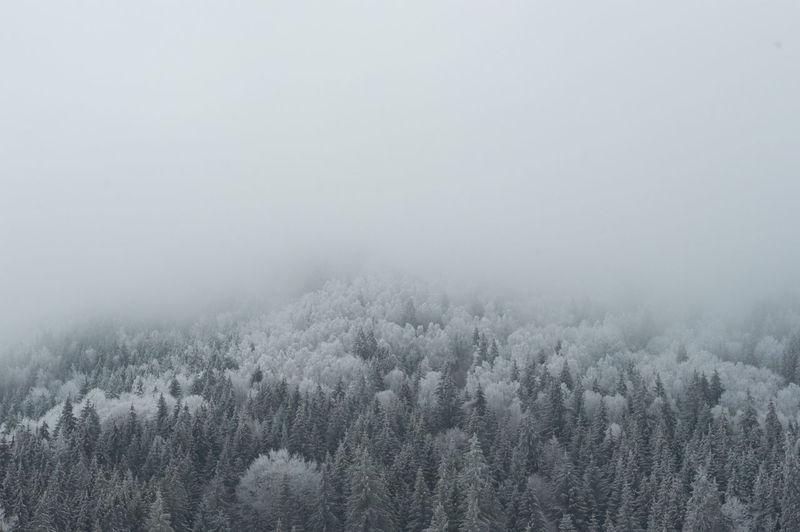Photo taken in Harghita-Bai, Romania