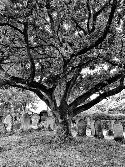 Calm Churchyard Death Life Religious  Spiritual Headstones Black And White Image Of A Tree In A Cemetery Peace And Quiet