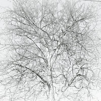 The beauty of trees black/white. Textured  Backgrounds Abstract Pattern Ink Full Frame Paper Cracked Retro Styled Old-fashioned Close-up No People Day