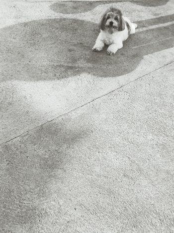 Dog Love Dogoftheday Mydog ♥ Hayley First Eyeem Photo