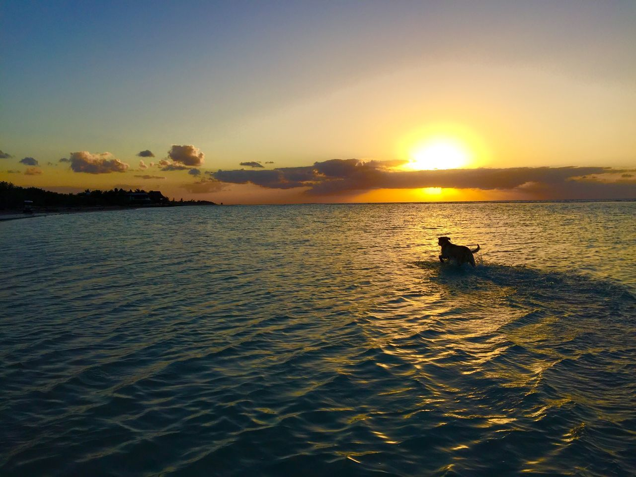 Silhouette Dog Running In Sea During Sunset