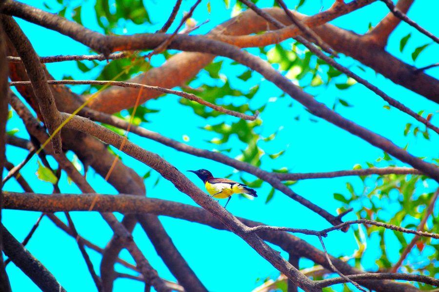 Beautiful Day Bird Photography Birds_collection Birdwatching Bird Nature Nature Photography Nature_collection Lovely Bird Birds🐦⛅ Birds_n_branches Birdporn Birdfreaks