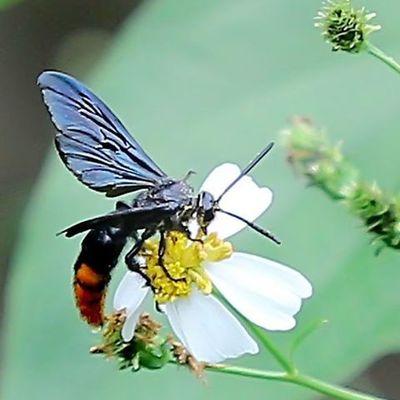 Uwn_macro Uwn_insect Macroworld_tr Tgif_macro Tgif_insect Insectagram KINGS_INSECTS Garden_explorer Macro_holics Macro_x Cool Cool_macro Bns_buginsects Bns_macro