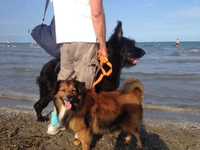 Canine Mammal Dog Pets Domestic Water Domestic Animals Sea Animal Beach Animal Themes Leisure Activity