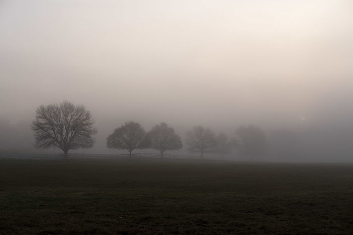 Bare Tree Beauty In Nature Day Field Fog Grass Landscape Nature No People Outdoors Scenics Sky Tranquil Scene Tranquility Tree Perspectives On Nature