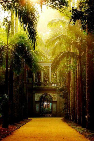 Architecture Nature Tree Bestoftheday Best EyeEm Shot Sunset_collection Jardim Botânico Rj Rio De Janeiro Eyeem Fotos Collection⛵ Brazil Traveling Bestpic