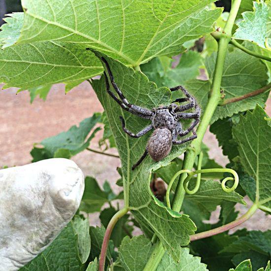 Spider at work Part 2 First Eyeem Photo