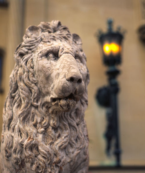 Statue Wall Mounted Animal Head  Animal Representation Animal Themes Architecture Art And Craft Close-up Colonial Architecture Creativity Day Focus On Foreground Iron Lamp Lamp Lion - Feline One Animal Representation Sculpture