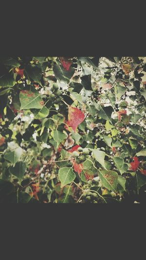 Fall Leaves Nature