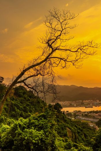 The Peeping Tree during Sunset Golden Hour Sunset Peeping Tree Sunset Sky Tree Plant Beauty In Nature Scenics - Nature Orange Color Nature Tranquil Scene Outdoors Branch The Great Outdoors - 2019 EyeEm Awards My Best Photo