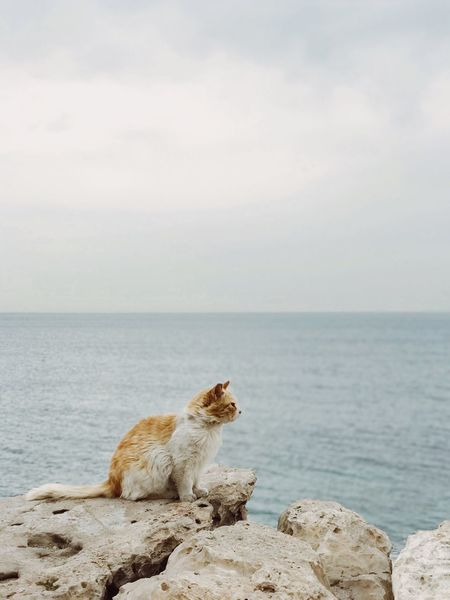 Pet Portraits Sea Horizon Over Water Rock - Object Water Nature Sky Pets One Animal Beauty In Nature Scenics Sitting Outdoors Animal Themes Mammal Tranquil Scene מייאייפון7 Domestic Animals Shotoniphone7plus EyeEm Selects The Week On EyeEm מייחתול IPhone7Plus