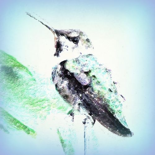 The Lookout. The Hummingbird Series Backyard Birder Welcome To My Garden