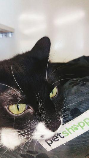 Kitty cat eyes Cats Need A Friend