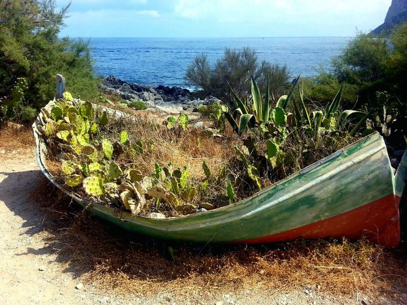 Ship Imbarcazione Sferracavallo Wood Plants Piante Summer Memories... The KIOMI Collection Nature's Diversities