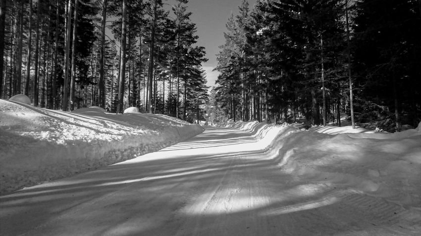 Black And White Winter Springtime Birch Birch Tree Birches Sunny Nice Day White Shadow Sun Shadows Shadows & Lights Tree Snow Winter Winding Road Cold Temperature Forest Road Tire Track Pine Tree Pinaceae Mountain Road Treelined Deep Snow Empty Road Country Road