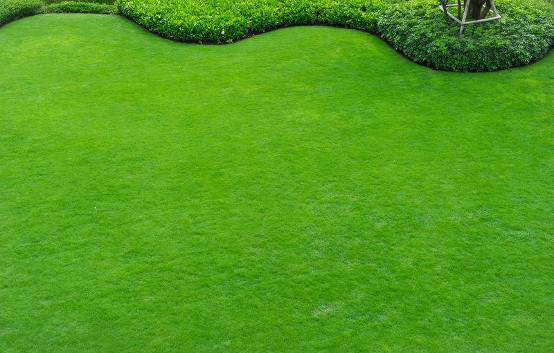 Full frame shot of green lawn