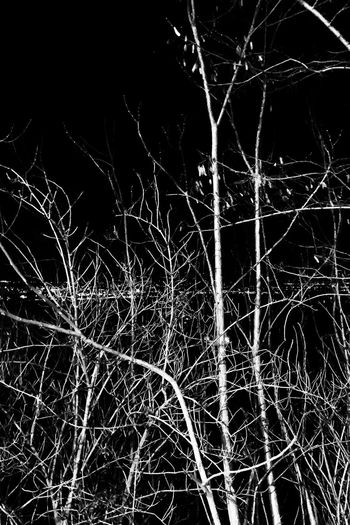 nocturnal mood Night No People Complexity Nature Full Frame Tree Illuminated Backgrounds Outdoors Plant Glowing Long Exposure Bare Tree
