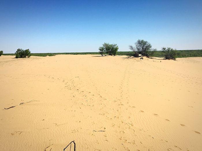 Sand Explore Footprints In The Sand Footprints Saskatchewan Lake Diefenbaker Sand Sand Dune Outdoors Nature Clear Sky Sunlight First Eyeem Photo