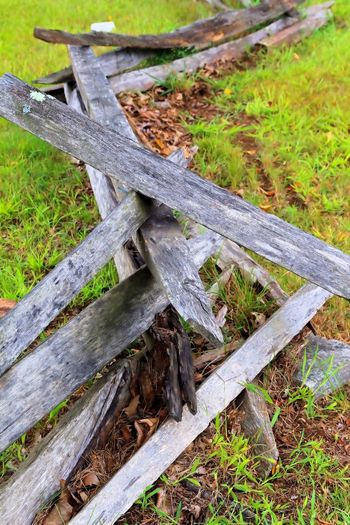 Beauty In Nature Close-up Day Freshness Grass Green Color Growth High Angle View Nature No People Outdoors Plant Split Rail Fence Tree Trunk Wood - Material