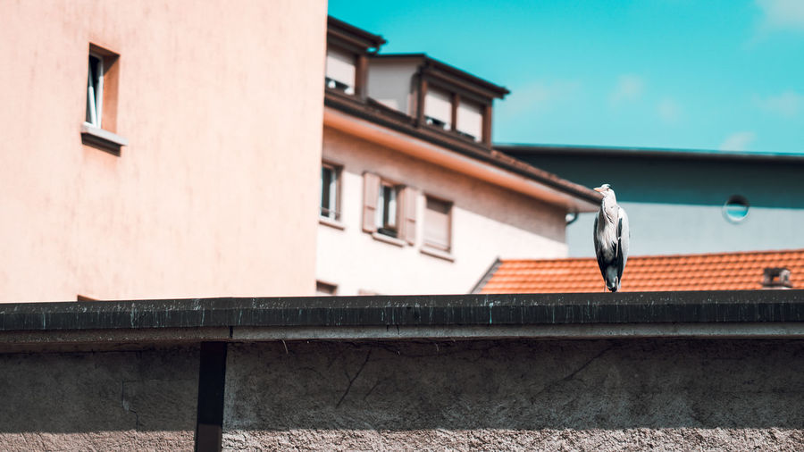 Low angle view of bird on retaining wall against building and sky
