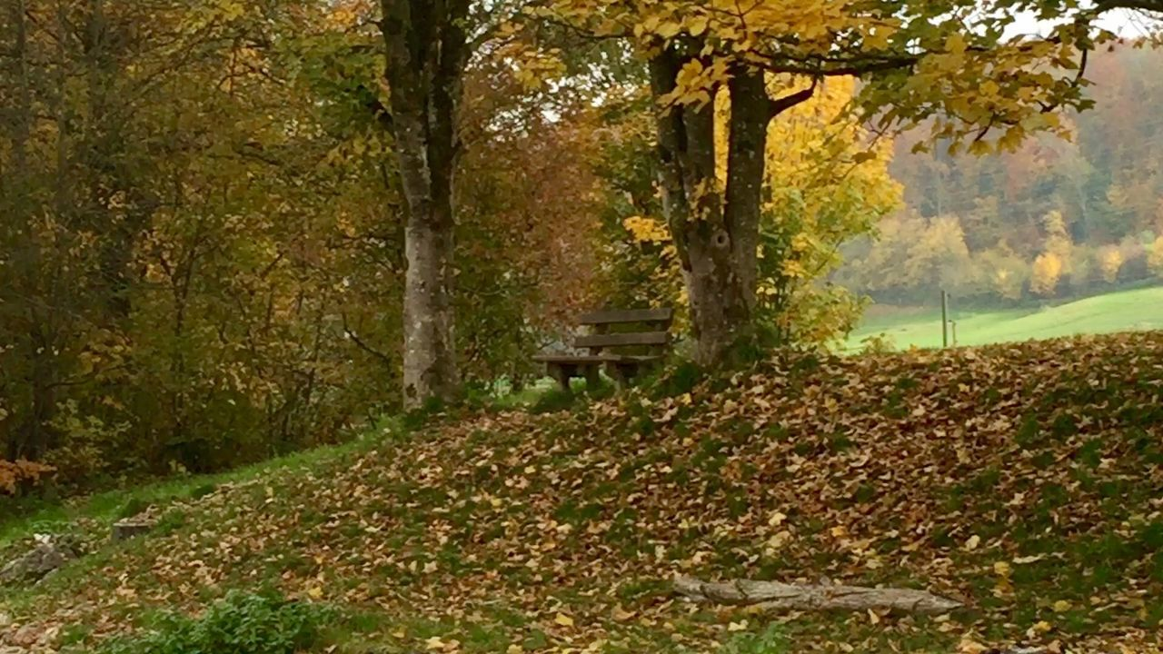 autumn, tree, nature, leaf, scenics, tranquil scene, change, tranquility, forest, beauty in nature, no people, day, outdoors