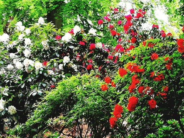 Nature Growth Red Full Frame No People Outdoors Day Backgrounds Beauty In Nature Close-up Tranquility Fragility Beauty In Nature Nature Plant