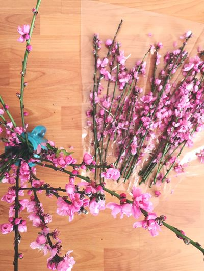 High angle view of pink flowering plant on wooden table