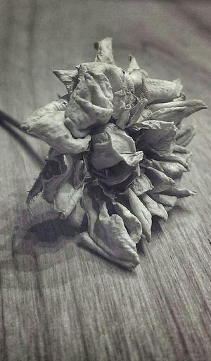Flowers Dead Rose Dry Flower