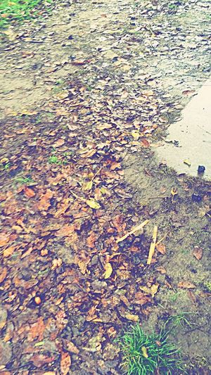 Autumn Leaves Leaf Autumn Season  Change Leaves Tranquility Water Nature Scenics Fallen Leaf Fragility Messy Natural Condition Beauty In Nature High Angle View