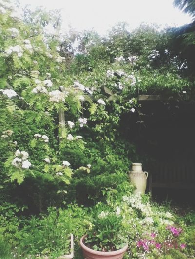My gardens so pretty